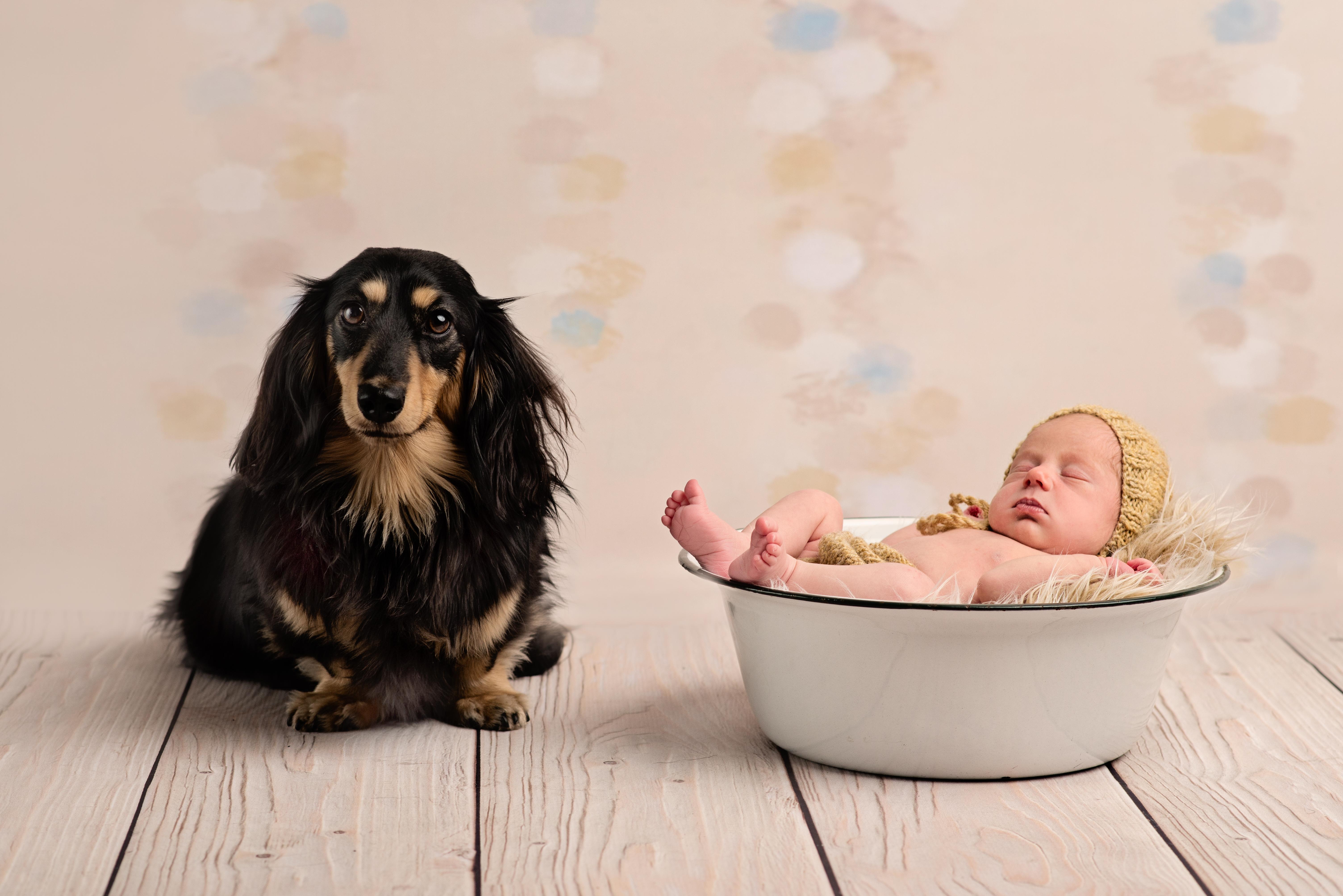 Dog and baby photography ola molik photography 7